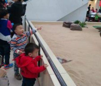 带娃参观恐龙---天津自然博物馆